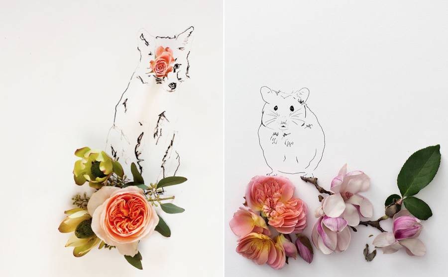animalillustrationsflowers0-900x558