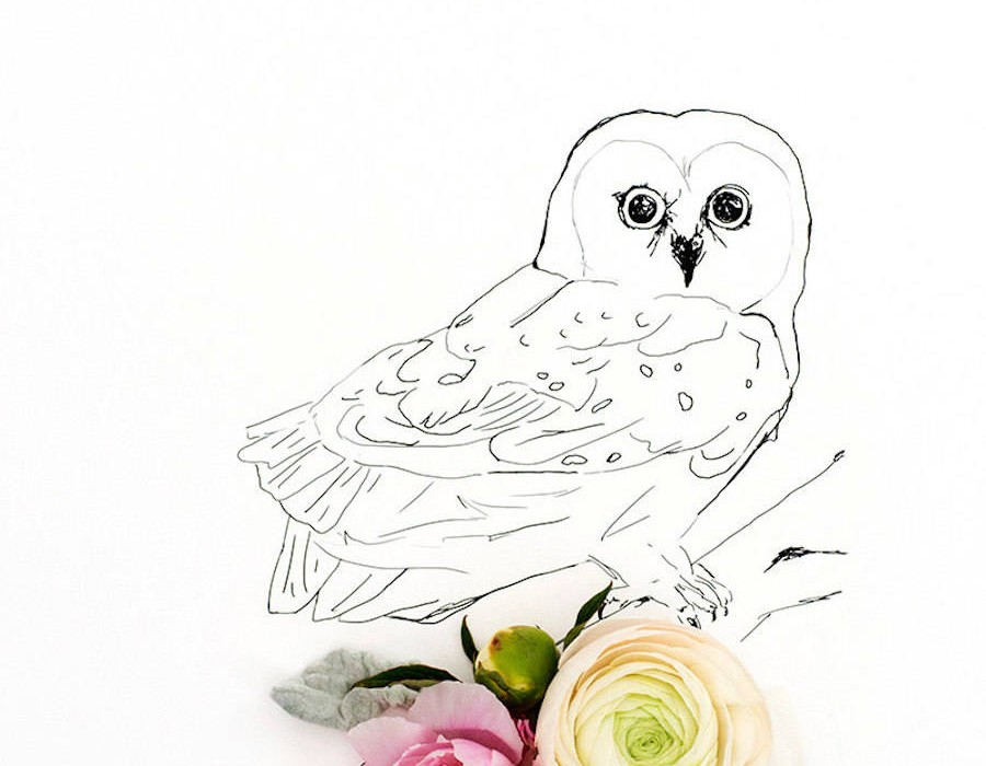 animalillustrationsflowers9-900x1125