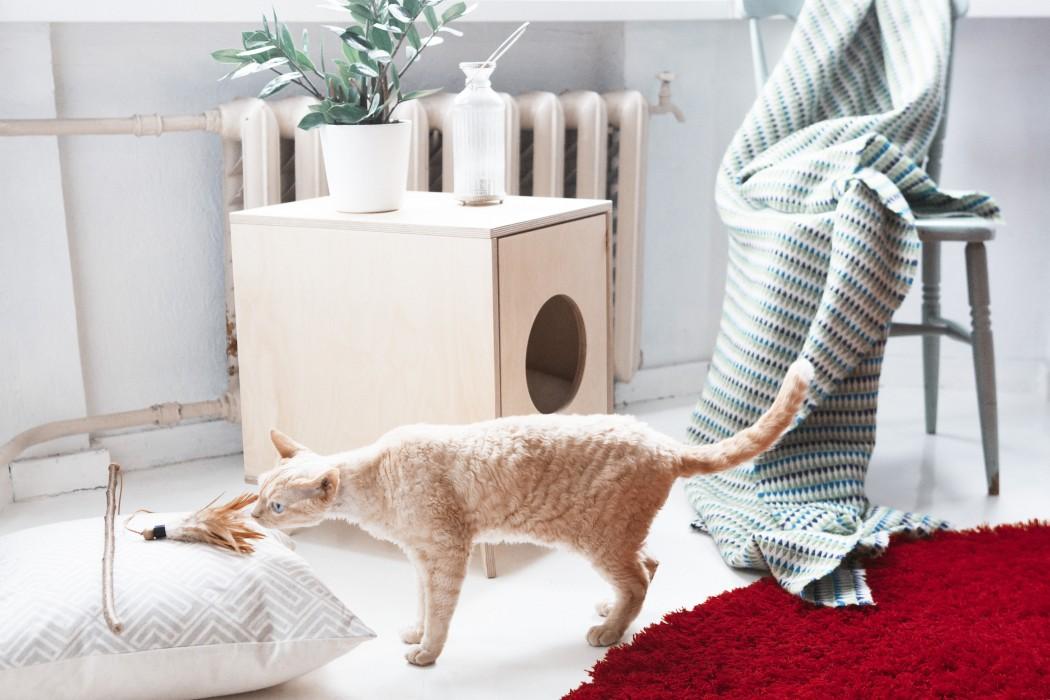 Catch_cats1