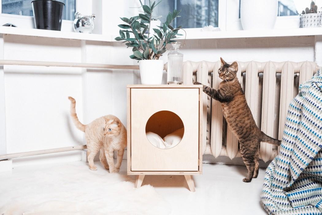 Juno_cats12