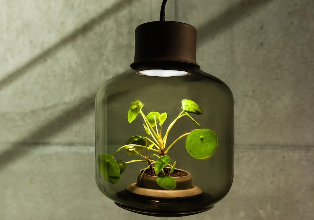 plantlamp_08