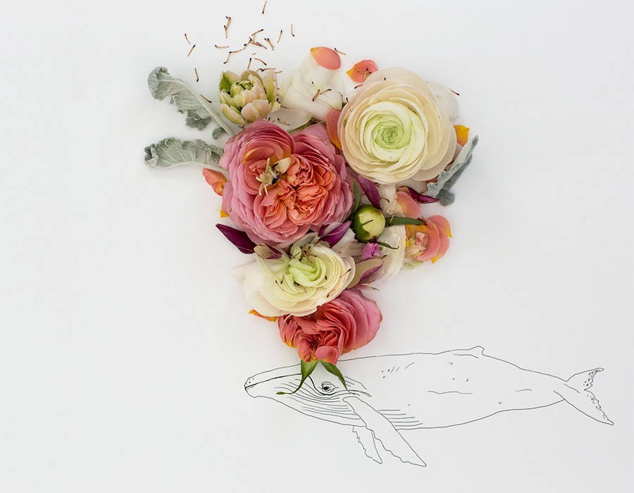 animalillustrationsflowers11-900x720
