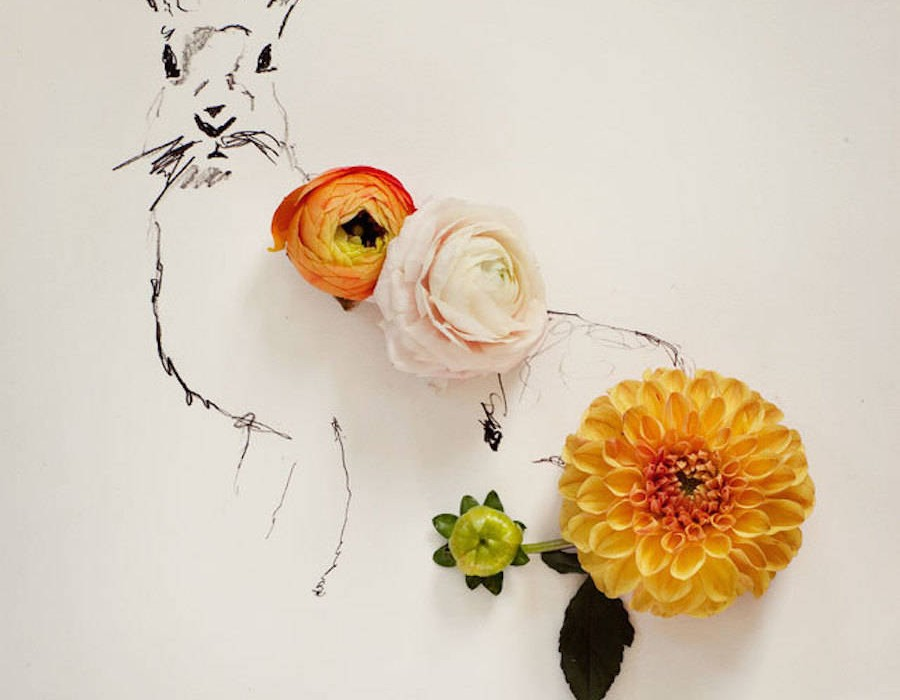animalillustrationsflowers2-900x1125