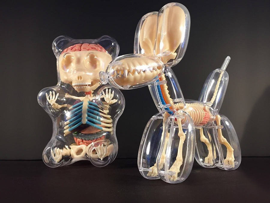 balloon-animals-filled-with-anatomical-details1-900x677
